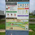 飯塚市河川敷ウォーキングコース (2)