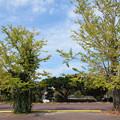 糸島市・丸田池公園 (1)