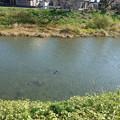 池田川河畔 (3)