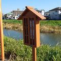 Photos: 池田川河畔 (4)