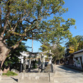 波多江地区の老松神社 (1)