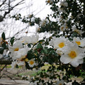 Photos: 縫ノ池 (14)