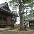豊玉姫神社 (7)