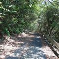 白木橋駐車場から白木谷梅林へ向かう (2)