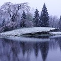 写真: 舞い戻る冬