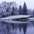 Photos: 舞い戻る冬
