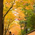 写真: 古刹の秋