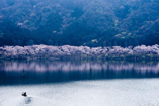 桜へ漕ぎ出す