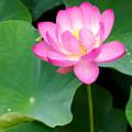 Photos: 仏の華
