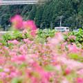 Photos: 赤そばとローカル線