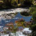 Photos: 古池の紅