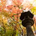 Photos: 灯籠ポートレート