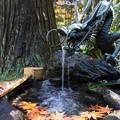 Photos: 森のドラゴン