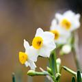 Photos: まだ見ぬ雪の花