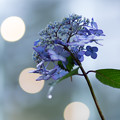 Photos: Purple Rain