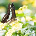 Photos: 花より蝶