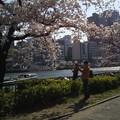Photos: 春の大川