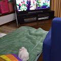 Photos: ぺっちゃんテレビを見る