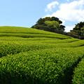 新茶山 美味しいのが間もなくお茶の間へ