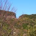 写真: tosaokitsusakatenboudai08