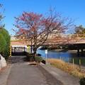 Photos: setanokarabasi05