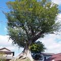 nomuraitiriduka01