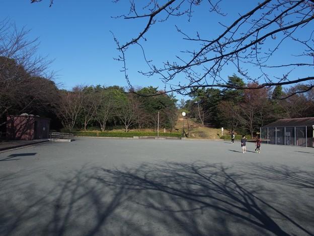 写真: uminomierukataokayamaryokuti04