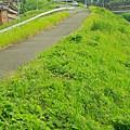 Photos: 堤防沿いの道