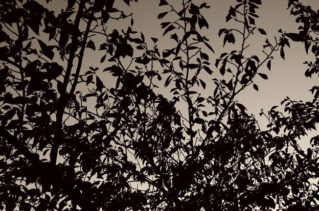 枯葉の覆い