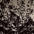 写真: 枯葉の覆い