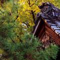 写真: 屋根瓦が黄色の陽を浴びる