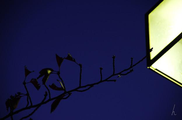 夜灯と枝葉