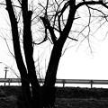 Photos: 立ち木