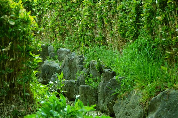 Photos: 植物の小路
