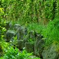 植物の小路