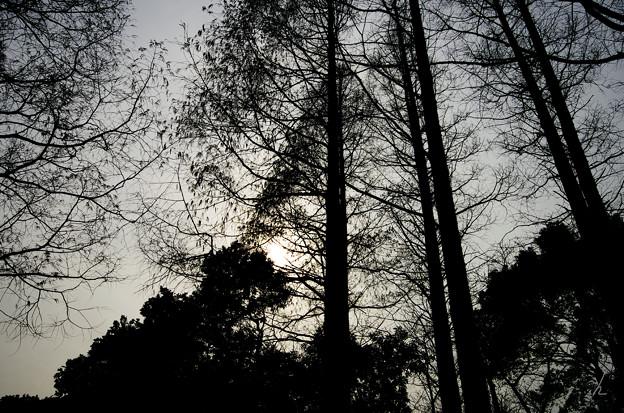 Photos: 木々の影