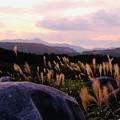 写真: 秋の平尾台