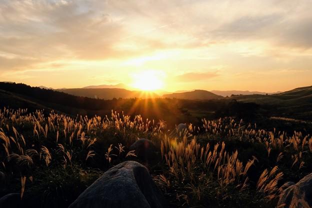 夕陽に輝く