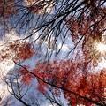 Photos: 朝日に輝く