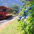 写真: 赤い列車と紫陽花