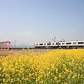 写真: ローカル列車と菜の花