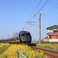 Photos: 列車と黄色