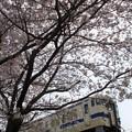 Photos: 桜の下