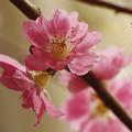 写真: 桃の花咲きて少しの春