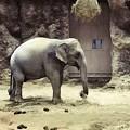 Photos: 象が来た!
