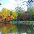 Photos: 都会の紅葉
