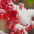 Photos: 雪が降る~