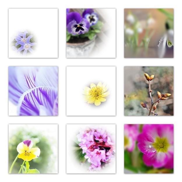 Photos: 春の花たち