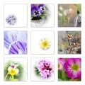 春の花たち
