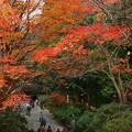 Photos: 万葉の秋
